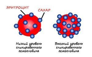 Эритроцит и сахар