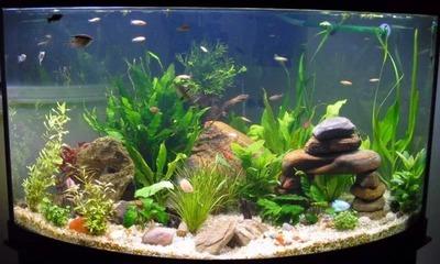 Отвечаем на вопрос можно ли заливать бутилированную воду в аквариум?