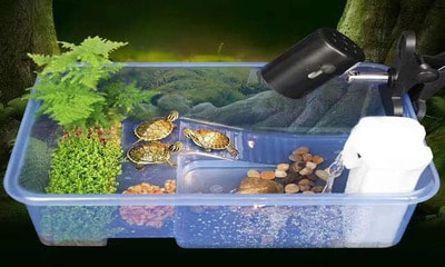 Разбираемся сколько нужно и какой воды в аквариуме для красноухой черепахи?