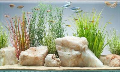 Готовим воду для рыб сколько и как необходимо настаивать перед тем, как заливать