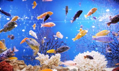 Как правильно посчитать по размерам аквариума сколько литров воды необходимо залить?