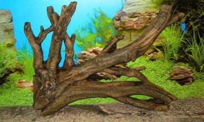 В аквариуме желтеет вода: почему и что делать