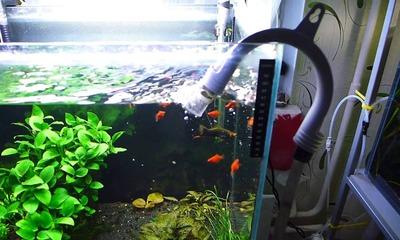 Подробная инструкция, как слить воду из аквариума