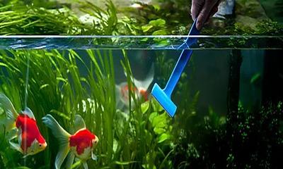 Полезная информация: как сделать воду в аквариуме кристальной и чистой