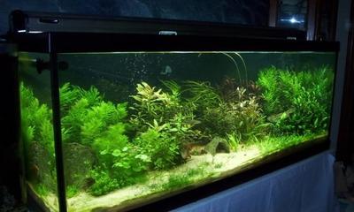 Выясняем, почему зеленеет вода в аквариуме и что с этим делать?