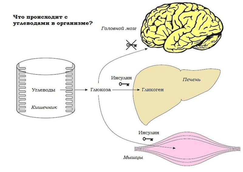 Функции глюкозы в организме