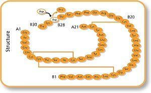 Молекула инсулина Аспарт