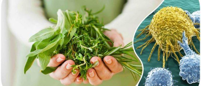 Травы при онкологии